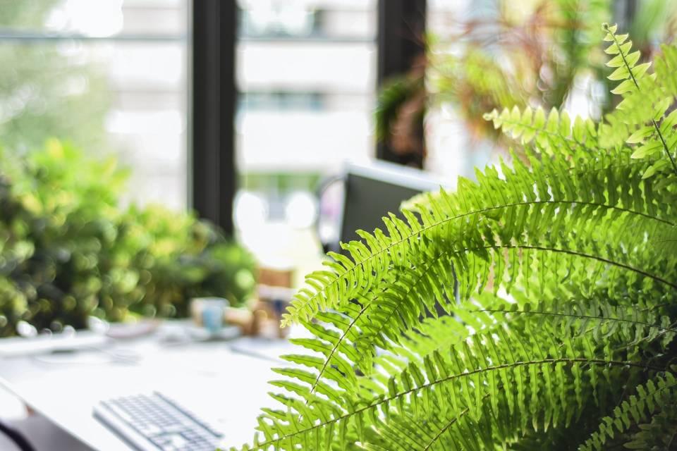 decoración plantas helechos
