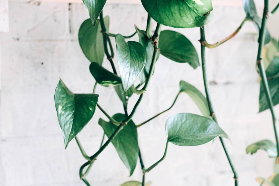 decoración plantas Poto